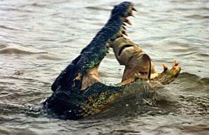 croc-shark_1365000i